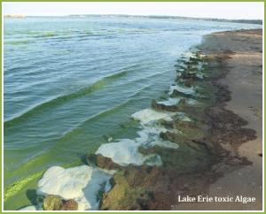 lake-erie-algae
